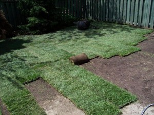 sodding lawn installation in progress north york