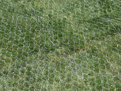 Raccoon Net A Fail Proof Protection Of Your Lawn Niko