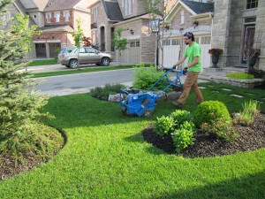 Niko's spring clean up - Aeration Thornhill Woods ON