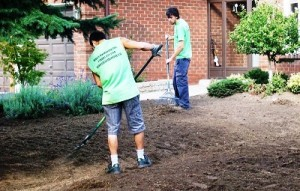 Raking & Removing Old Roots before Sodding