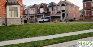 Great turf lawn