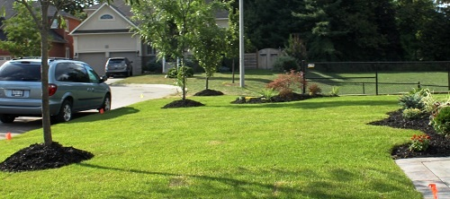 Mid Summer Turf Lawn to be fertilized