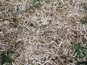 Grass Thatch up close