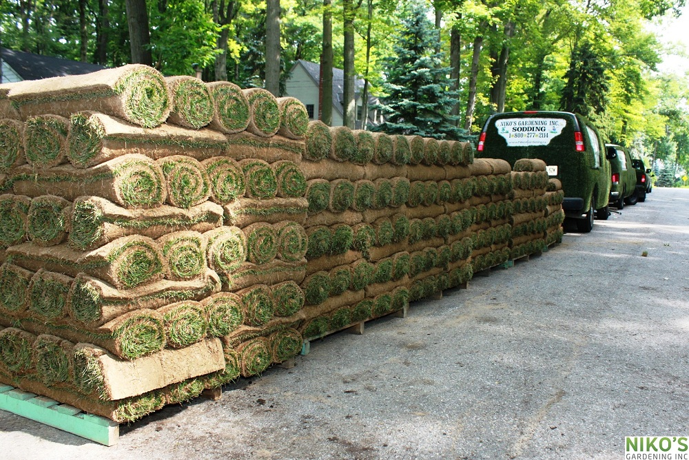 A lot of Sod delivered for the new turf installation in Mississauga