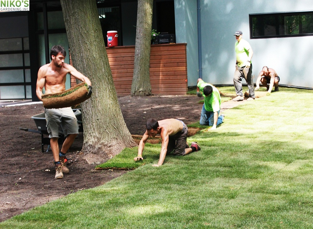 Niko's Sodding team at work, creating new turf-lawn in Mississauga