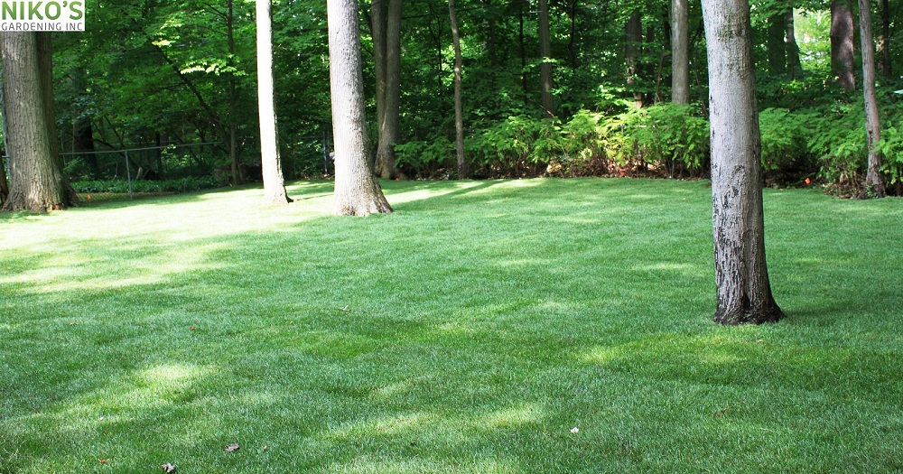 Sodding complete, new turf lawn created in Mississauga