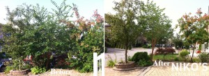 Pruning and Hedge triming